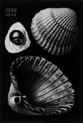 Ракушки. 1949, меццо-тинто