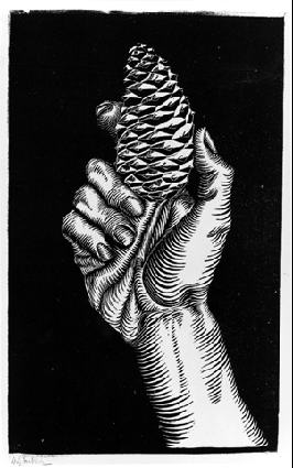 Рука с еловой шишкой