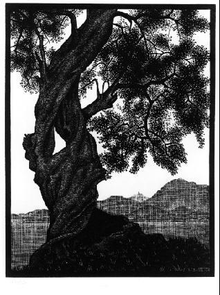 Старое оливковое дерево, Корсика. 1934, резьба по дереву